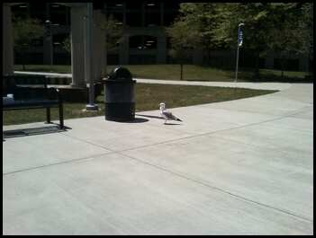 Seagull at Housatonic Community College in Bridgeport, CT. Photo by Katelyn Avery.